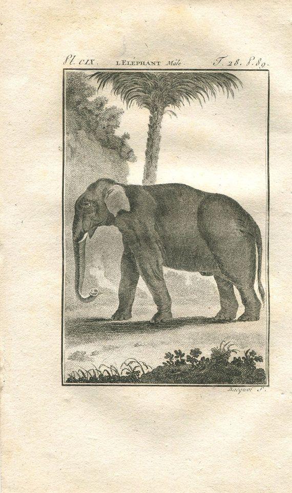 1808 Male Elephant Antique Print Copper by CarambasVintage on Etsy