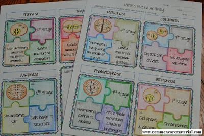 Mitosis Puzzle Activity | Biology lessons, Mitosis ...