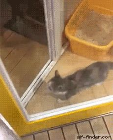 Cats reaction when his owner comes home