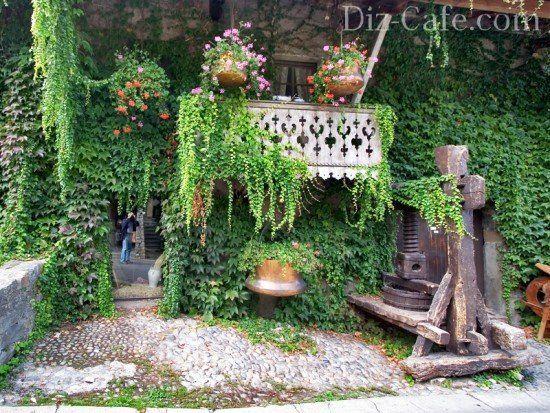 Ампельные растения и лианы для сада - виды (+ фото) и советы по выбору