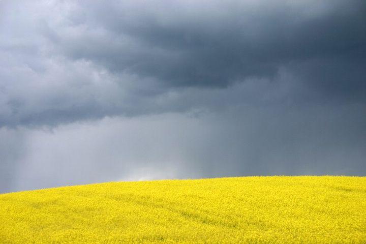 HorizonDesign Inspiration, Linseed Fields, Golden Fields, Yellow Fields, Marcin Nawrocki, Beautiful, Grey Yellow, Horizon Colors, Inspiration Folder