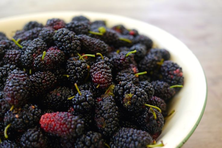 mulberries - Late Spring Foraging: Dianella + Mulberries
