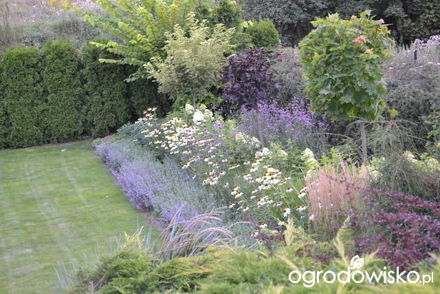 Ogród bacowej - strona 11 - Forum ogrodnicze - Ogrodowisko