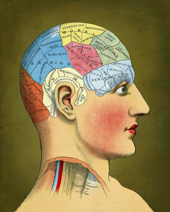 Medical Anatomy Print