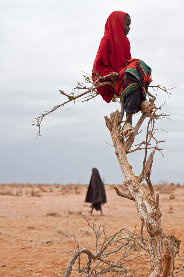 A Somali refugee girl sits perched on a tree in Ifo camp, Dadaab in Kenya Photo by Brendan Bannon via The Big Picture