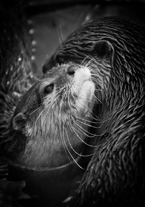 Significant otters @Alex Jones Jones Jones Endsley