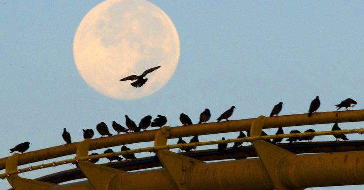 Pássaros pousam sobre o trilho da montanha russa no pier de Santa Monica, na Califórnia, tendo ao fundo a superlua. O fenômeno avistado nesta segunda-feira (11) é o mais intenso e brilhante, segundo astrônomos da Nasa (agência espacial americana)