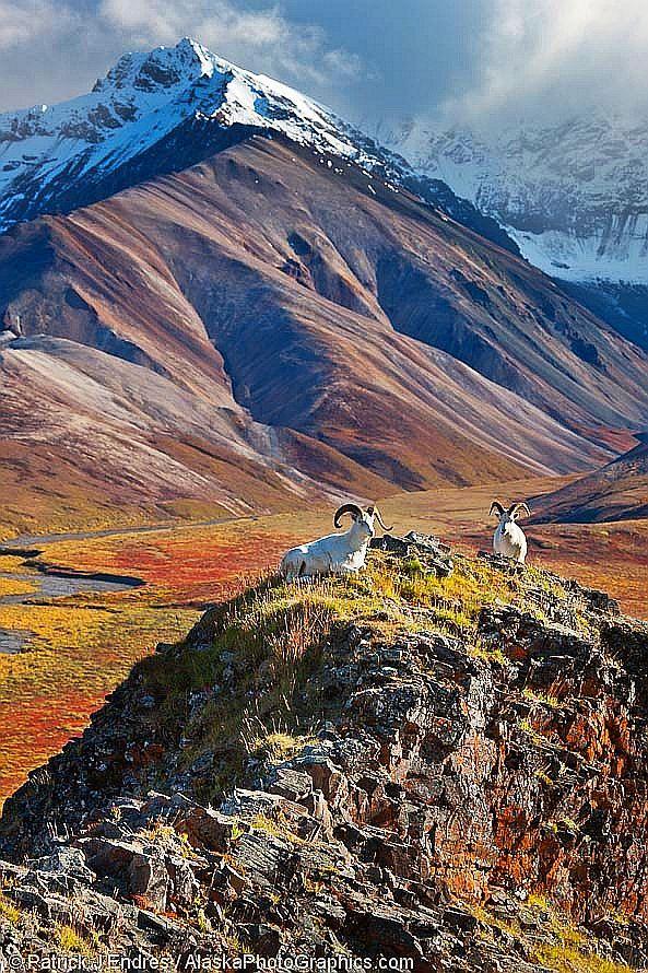 Polychrome Pass, Denali National Park, Alaska