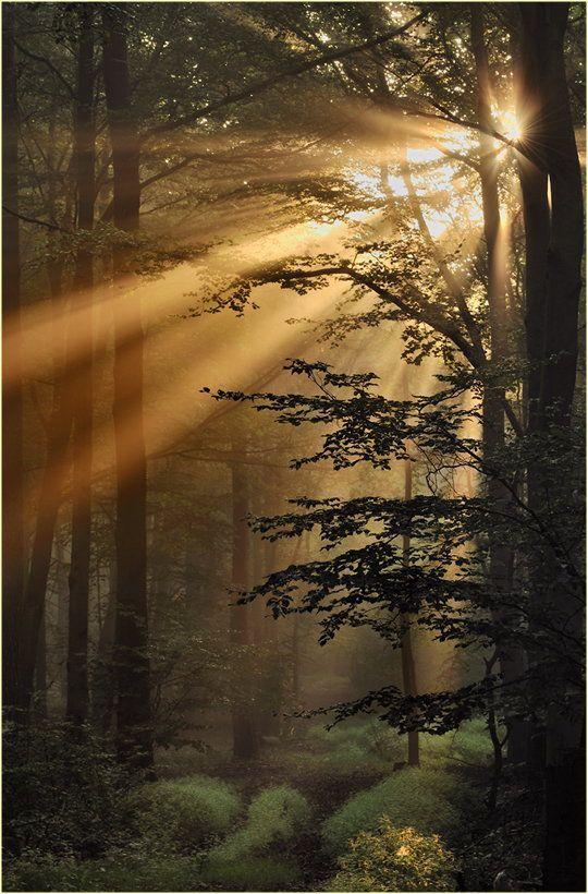 Tiefstehende Sonne strahlt durch den Wald