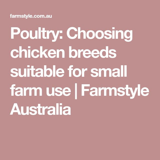 Poultry: Choosing chicken breeds suitable for small farm use | Farmstyle Australia