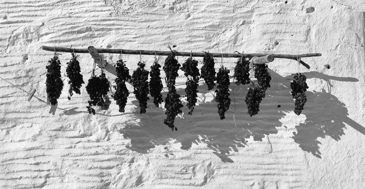 Drying Grapes, Paros (1968)