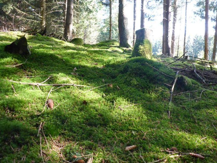 Diese Wanderung führte mich durch den Wald von Roßbach nach Heiligkreuz. Über einen Forstweg ging es am Weisenbach entlang durch ein Wildes Tal zurück nach Roßbach.