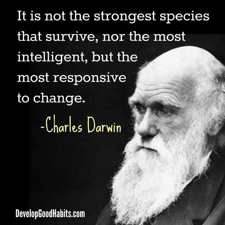 Darwin Quotes: Best 25+ Dreaming Quotes Ideas On Pinterest