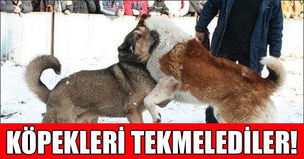 Zonguldak'ta kavga eden köpekleri vicdansızlar tekme atarak ayırdı!