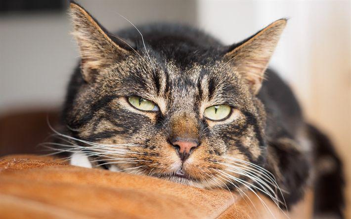 Download wallpapers cat, portrait, home pets, domestic cat