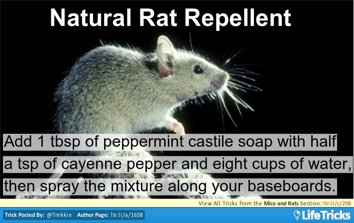Mice and Rats - Natural Rat Repellent
