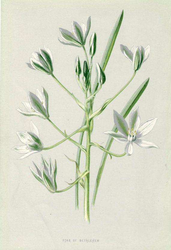 Colour Book Plate Vintage Botanical Print by PeonyandThistlePaper, £7.50