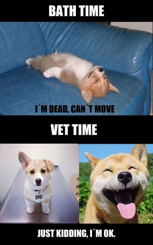 a perfect veterinarian  joke