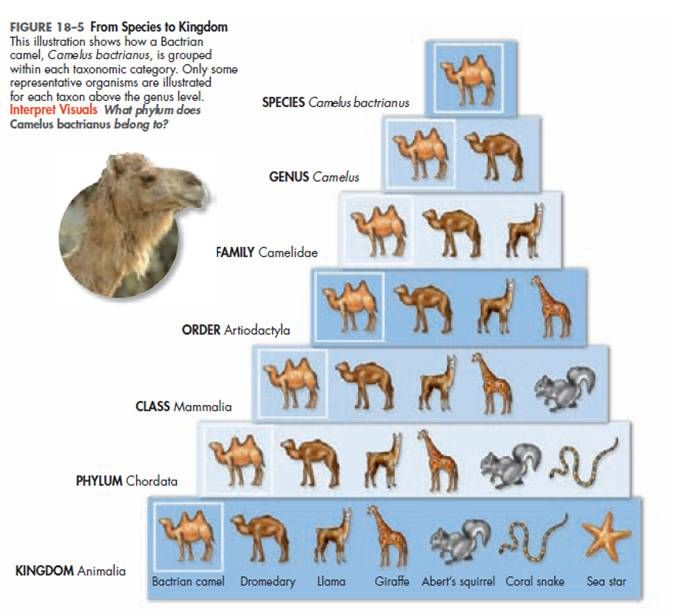 classification of animals examples of methods and theories In this tutorial you will be learning about the linnaean system of classification used in the biological understand why some animals are considered to.