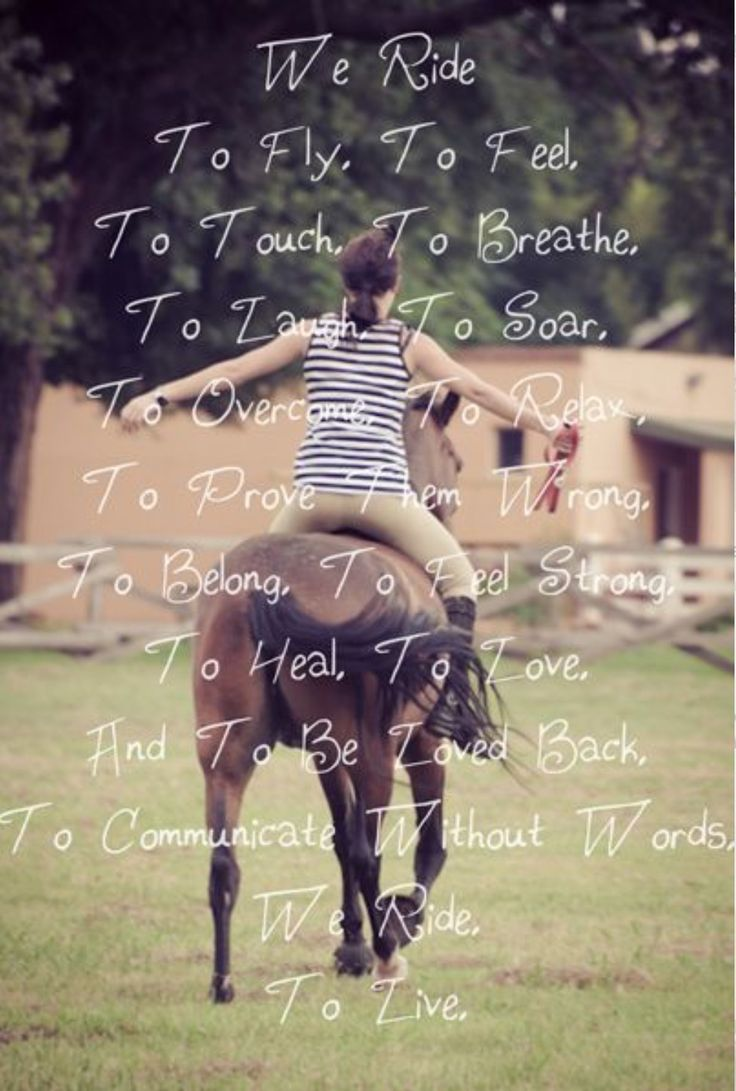 Neighs Tags: Equestrian Quotes , Horse Quotes Noments