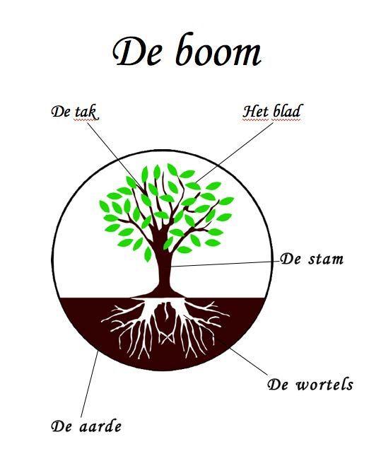 De boom (met woorden in de weer)