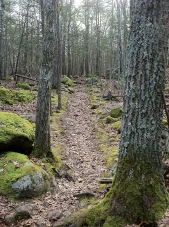A trail among the woodland park-Ravenswood Park in Gloucester