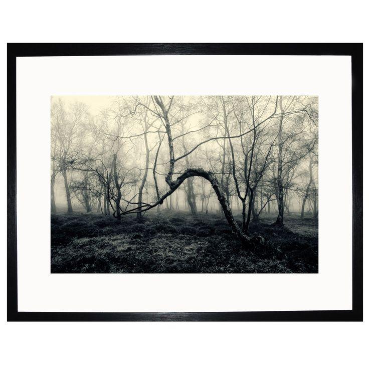 Unique Tez Marsden Bent Tree Signed Framed Print xcm ACHICA