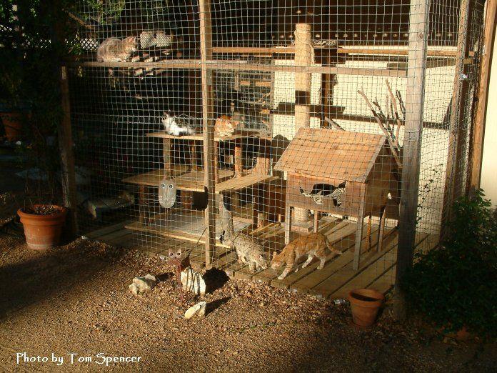 "Patio Cat Enclosures | of the cat enclosure with Luna, Xoxo, Rufous, Maya, and Fez. The ""cat ..."