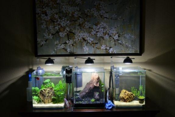 25 best ideas about nano aquarium on pinterest betta tank betta aquarium and aquarium set. Black Bedroom Furniture Sets. Home Design Ideas