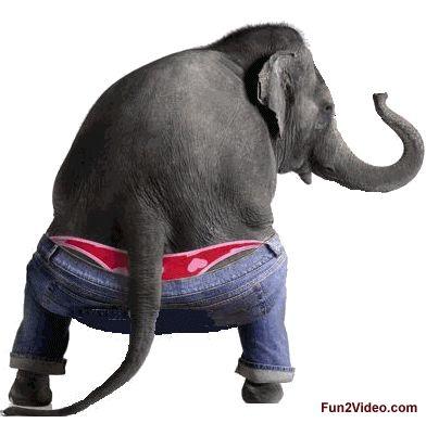 Sexy Elephant Cartoon Animated Elepha...