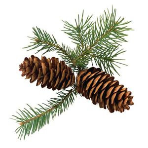 Great gift for teacher or gramma. Coat a pinecone in peanut butter, roll in sunflower seeds and attach a pipecleaner....makes a cute handy bird feeder for winter. Great kids gift they can give and make themselves.
