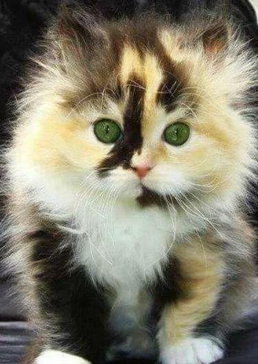 Pretty little Green Eyes.❤❤❤