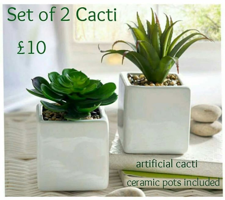 Artificial Cacti with pots included.