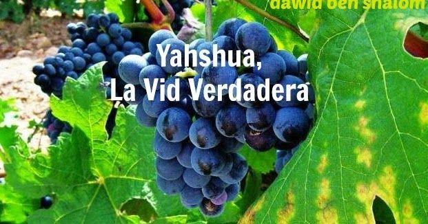 1AAYahshua,+La+Vid+Verdadera2.jpg (621×326)
