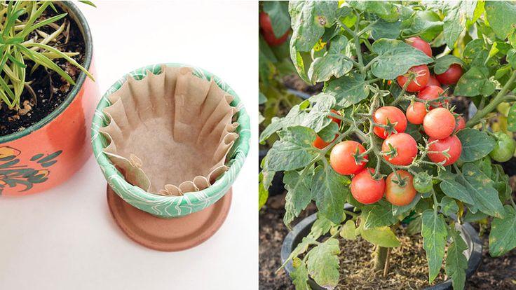 Har det börjat klia rejält i trädgårdsfingrarna? Med hjälp av de här fiffiga knepen kan du maximera chanserna att lyckas med dina hemmaodlingar.