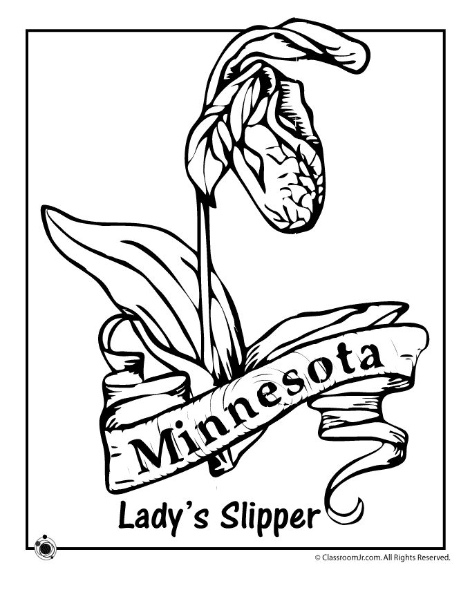 state flower coloring pages minnesota state flower coloring page classroom jr