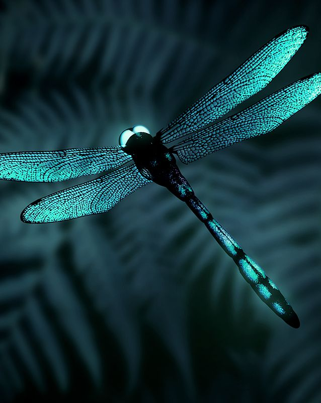 dragonfly by lareux on deviantART