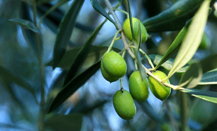 Valtenesi con Gusto: il Consorzio Olio Garda Dop presenta 9 cene a tema