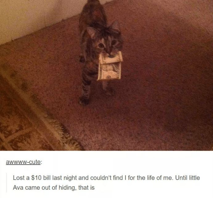23 Tumblr Posts About Kittens That Will Make Your Day Instantly