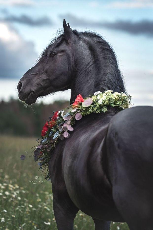 Pferdefotografie Nrw Hier Siehst Du Eine Auswahl Aus Meinen