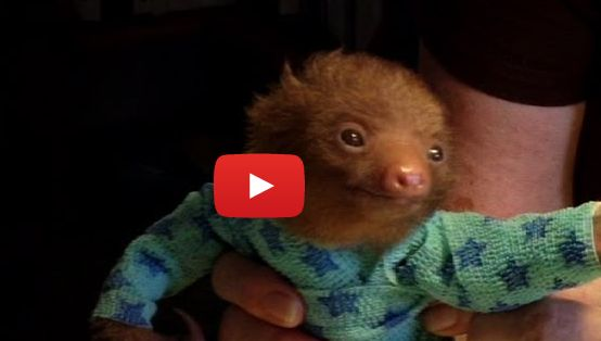 10 Cutest Sloth Videos You Must See TODAY!