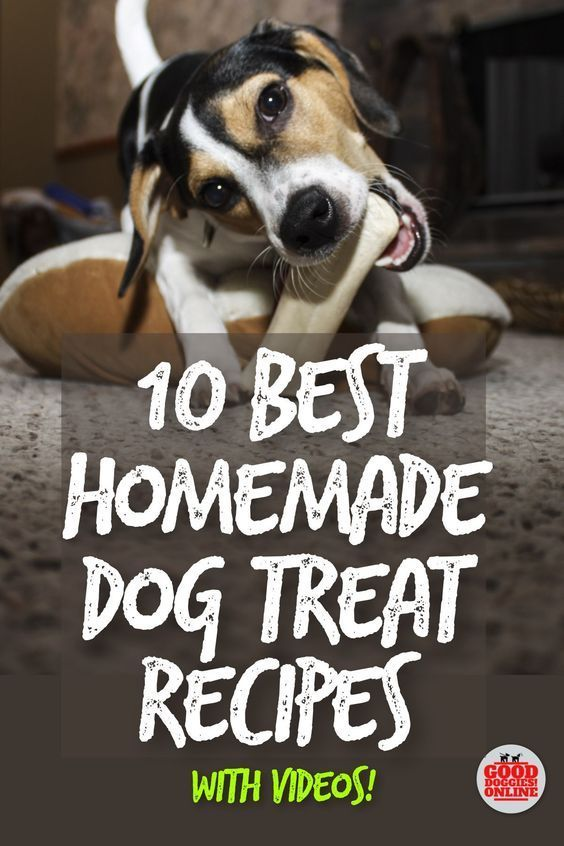 Homemade dog treat recipes are the best because you know exactly homemade dog treat recipes are the best because you know exactly what your dog is eating solutioingenieria Choice Image