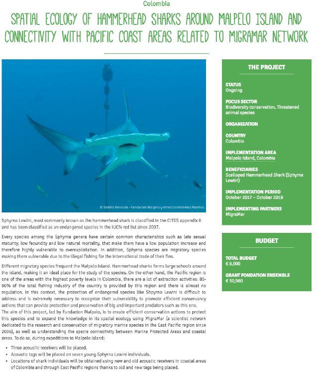 Proyecto de conectividad de Tiburones Martillo con la Fundación Ensamble