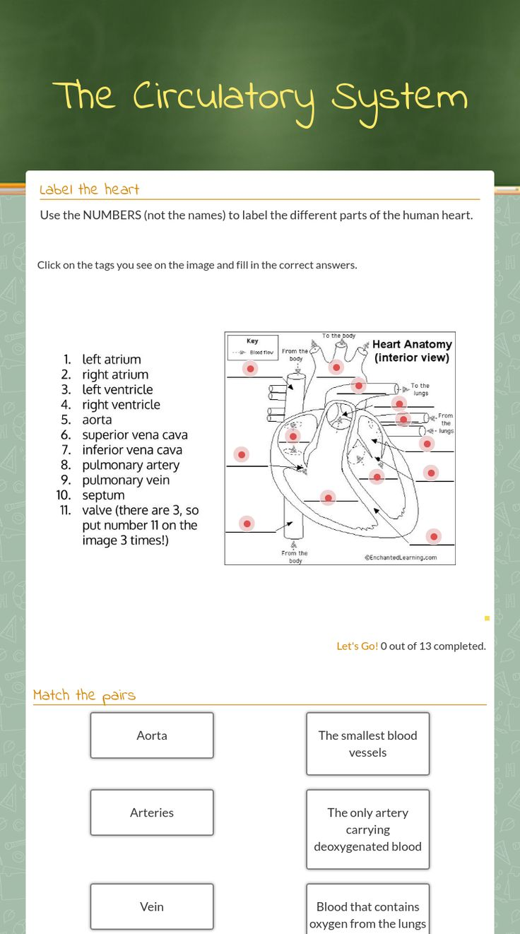 70 best images about science worksheets on wizer on pinterest me blended worksheet the circulatory system robcynllc Image collections