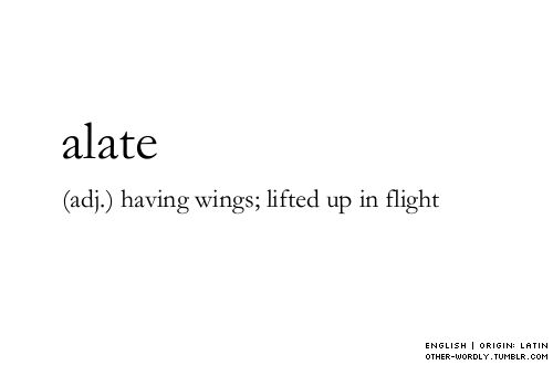 pronunciation | A-'lAt                          alate, adjective, english, origin: latin, having wings, wings, lifted up in flight, flight, flying, sky, tagging is hard guys, words, word, definition, definitions, otherwordly, other-wordly, A