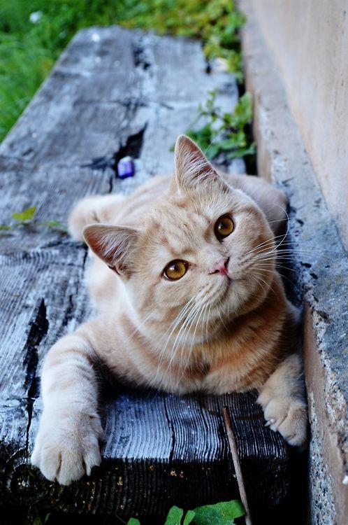 Peaceful kitty