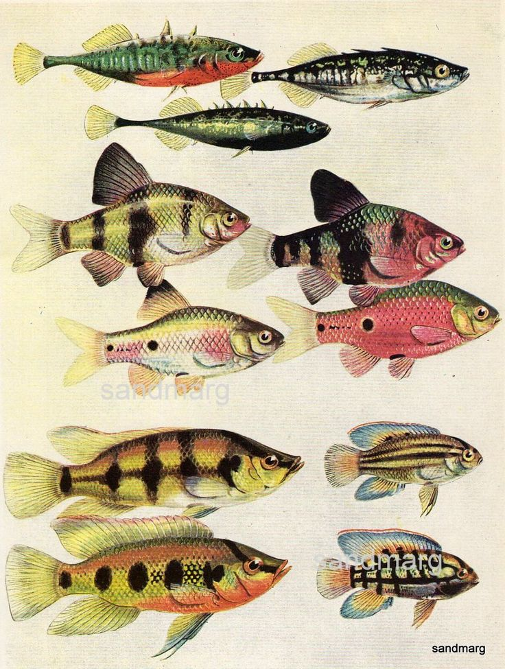 Tropical Fish Breeding Colors