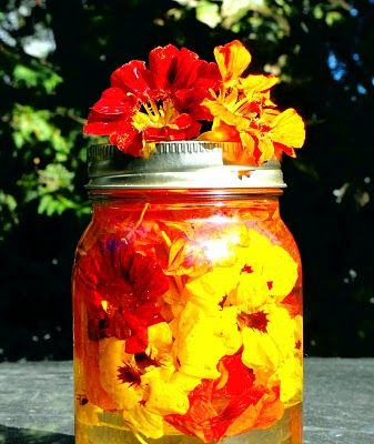 A recipe (and great photo) for nasturtium vinegar, as well as a bunch of others, from a blog called Twig and Toadstool