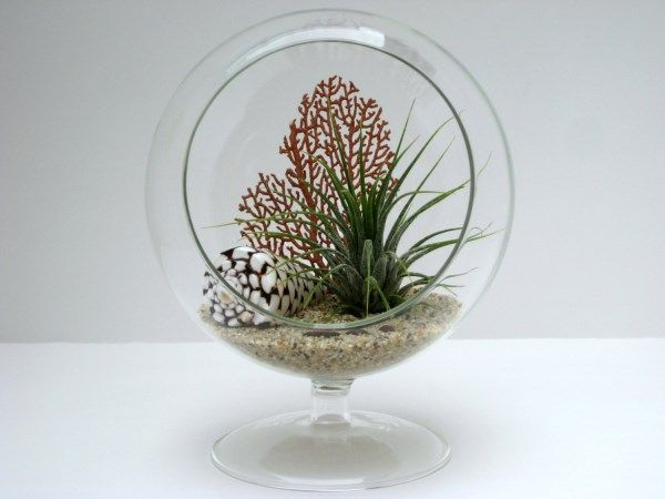 Footed air plant terrarium with shell for some low-key easy greenery
