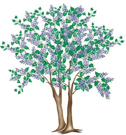Large Lilac Tree Wall Stencil